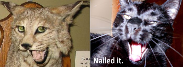 Nailed-it Meme cat nailed it